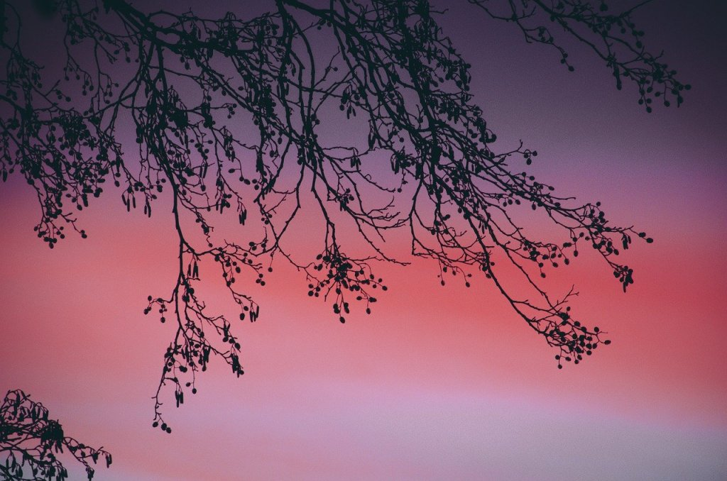 Tree branches against a pink sunset